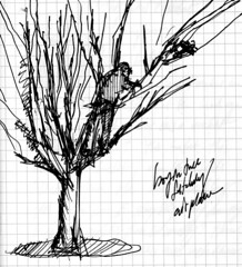 Journal 2 February 2005 / Boy in Tree Fetching Airplane