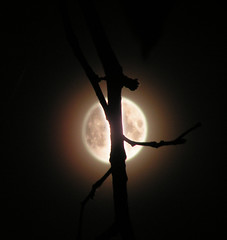 Ksiycowa noc :) (diavoli) Tags: ksiyc moon night noc light branch tree beautiful 100v10f