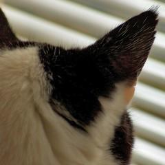 lookout (leo59) Tags: home cat square leo59 sq tijger kattig