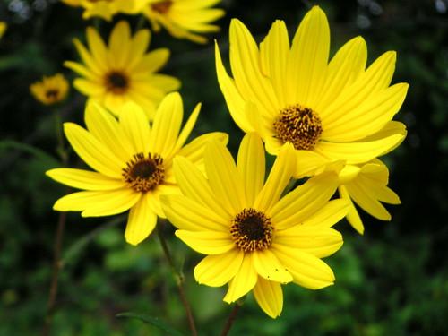 4297468 5763e6357e - ~! Oct Flowers !~