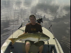52lb redfish (Get 1 Charters) Tags: redfish mosquitolagoon floridafishing