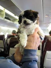 travel-dog-us-europe-airplane