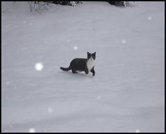 Hyperion-sous-la-neige (Etolane) Tags: hiver neige snow winter blanc white hyperion flocons flakes