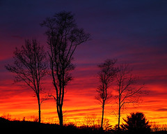 Rebuck Sunset (eqqman) Tags: sunset red sky orange cloud tree silhouette yellow landscape topf50 purple topv1111 500v50f topi hooflander