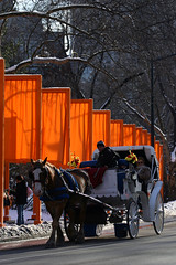 Horse and Cart (cluttercup) Tags: orange nyc gates gatesmemory