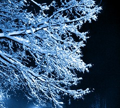 sn2036 (Zoran Skaljac) Tags: blue winter snow tree night europe serbia picasa novisad zoran kaljac skaljac srbija futokiput