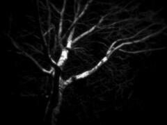 Night Tree (Dave Ward Photography) Tags: 2005 blackandwhite bw usa tree night ir us washington unitedstates branches unfound spooky urbannature infrared bellingham wa whatcom themenight davewardsmaragd