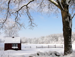farmstand in winter