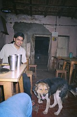 Dog at Bobby Dhaba