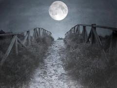 liar's moon (soleá) Tags: blue moon holland nature night dark landscape photography europe fotografie heather thenetherlands moors overijssel digitalmanipulation lemelerberg soleá carmengonzalez