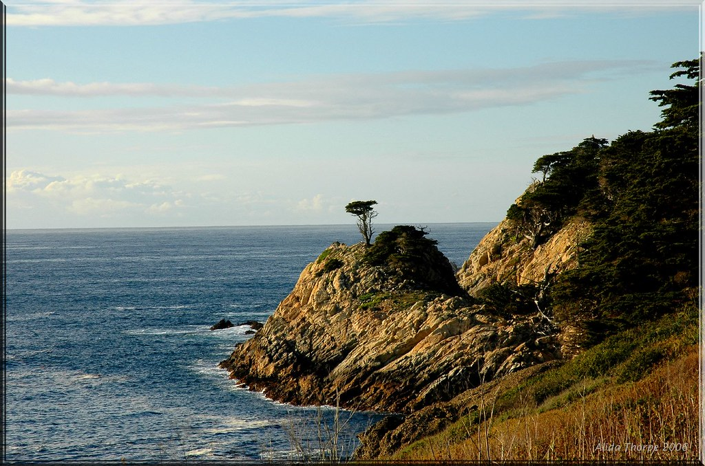 Cypress Trees, Point Lobos