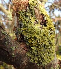 Anglų lietuvių žodynas. Žodis algae reiškia Dumbliai lietuviškai.