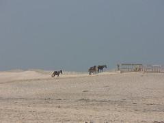 together (mary13) Tags: assateague beach maryland