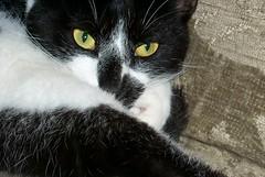 poop cat of mystery