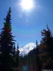 Mount Rainier, Washington (Gregg Zimmerman) Tags: trees sun mountain forest volcano washington olympus mountrainier mountrainiernationalpark e300 p8055668