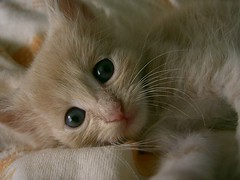 Stay by me till I sleep (Marchnwe) Tags: cats searchthebest