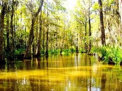 Louisiana Swamp (Kelly Angard) Tags: altered canon louisiana bravo swamp 300views handcolored craftygirl photoart handtinted photopainting alteredimage alteredphoto kellya 222v2f alteredphotos kellyangard thecraftygirl efs1755mm kellyafineartphotography digitalrebelxtefs1755mm