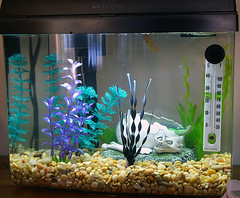 Aquarium (barron) Tags: aquarium fishtank tropicalfish pets