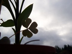 Slightly short of Luck (Comrade_S) Tags: leav windowsill eveining flower life comrades