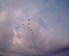 Geese Over Odiham
