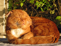 Nice! (Steffe) Tags: orange pet topf25 sunshine cat canon interestingness topv555 europe afternoon searchthebest sweden veranda tungelsta bergdalen haninge svanspervot yf top20fav2005 20topfaves2005