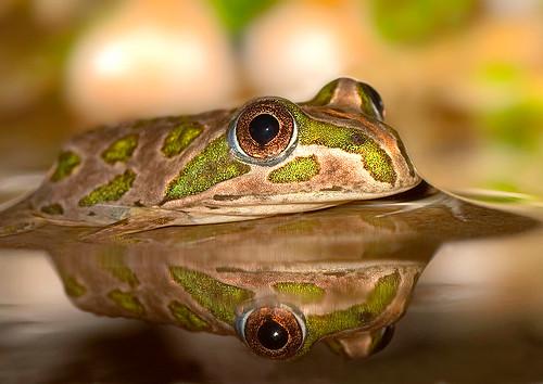 frog reflecting on life