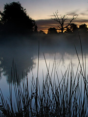 The Reeds and The Tree (Kevin Day) Tags: uk england mist lake water sunrise dawn deadtree slough berkshire kevday langleypark chtk