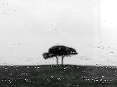 distant (loungerie) Tags: trip travel trees bw rome tree window rain weather topv111 alberi train wonder blackwhite impressionism albero 4winter copertina urfavstrees