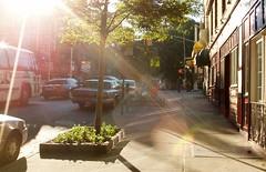 Turn the corner (emelfr) Tags: kewgardens mywalktowork sunbeams sunlight