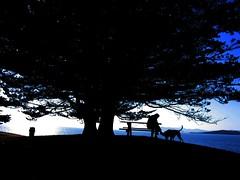 under a tree (CoastRanger) Tags: 2005 sf sanfrancisco california coastranger ca blue sunset sky favorite dog sun nature water animal skyline reflections bay interestingness dusk calif communication goldengate bayarea albany sanfranciscobay sfbayarea sfbay shiningsea albanycalifornia alamedacounty favorited flickrfavorite albanyca gooddawg favoritedbyflickrographers sfchronicle96hrs
