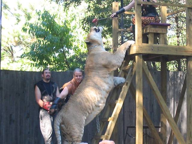 World's Biggest Cat