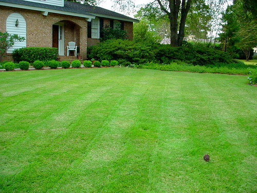 The Lunacy Of The American Lawn The Healthy Home Economist