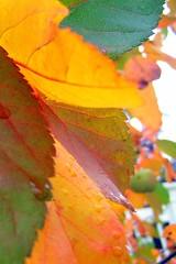 Colors of Fall - by MaureenShaughnessy (aka MontanaRaven)