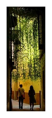Lluvia verde (ALVARO CARNICERO) Tags: espaa topv111 1025fav sevilla andaluca spain europa europe 100v10f andalucia eps1 eps2 eps3 eps4 eps5 eps6 espaayportugalseleccin eps7 alvarocarnicero wwwalvarocarnicerocom
