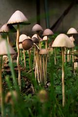Magic mushrooms for rainbow11 (PauPePro) Tags: mushroom magic 510favs pilze garten