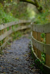 Boardwalk (Mark Demeny) Tags: nature washington dof redmond fujifilmfinepixs3pro mytopf