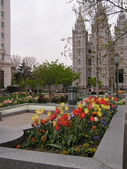 Flowers, #4 (/:\ Road Warrior /:\) Tags: travel flowers church utah tulips saltlakecity mormon lds marketsquare latterdaysaints