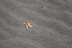 _MG_5119-01 (notsnot) Tags: canon rebel xt sand dunes night