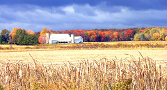 Farm and Trees (joeldinda) Tags: autumn trees red orange field yellow barn catchycolors farm f10 michiganfavorites 110fav farmyard joeldinda