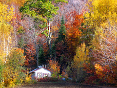 Flamboyant* (Imapix) Tags: voyage travel autumn red house canada art fall nature topf25 colors yellow topv111 canon wow catchycolors wonder photography photo topf50 bravo colorful foto photographie natural image quebec gutentag topv1111 topc50 qubec favourites shack topf100 favs flamboyant imapix topfavpix gatangbourque gatanbourque copyright2006gatanbourqueallrightsreserved gaetanbourque pix50 pix100 imapixphotography gatanbourquephotography