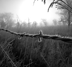 ...Prairie Pogonip... (Random Images from The Heartland) Tags: chris blackandwhite southdakota frost hoarfrost bailey barbedwire prairie pogonip topf20 chrisbailey bail56 randomimagesfromtheheartland chrisbaileyimages