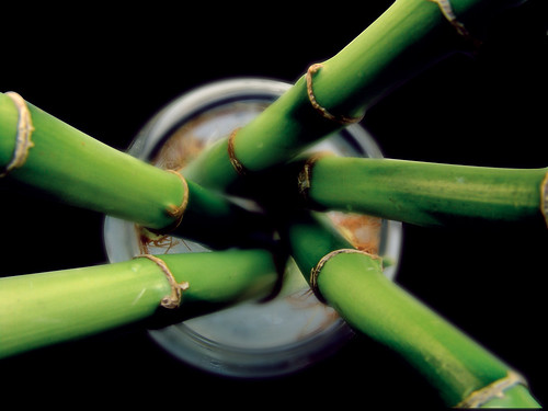 Raw Bamboo