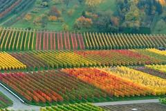 Heuchelberg Vineyards (allanimal) Tags: colors leaves tag3 taggedout germany geotagged vineyard topf75 bravo tag2 tag1 wine fallcolors topv1111 topc50 100v10f grape badenwrttemberg allanimal heuchelberg leingarten geo:lat=491291 geo:lon=91079