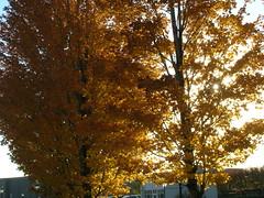 DSCN1497 (Wintermute Lives) Tags: harvard hbs akhbar healthcare conference boston autumn