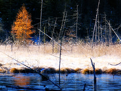 Iciness* (Imapix) Tags: voyage travel blue trees lake canada fall ice nature topf25 forest wonder frozen photo colorful photographie mr natural quebec qubec freeze favourites wildplant larch favs jackfrost imapix topfavpix iciness gatangbourque gatanbourque copyright2006gatanbourqueallrightsreserved  copyright2006gatanbourqueallrightsreserved pix50 imapixphotography gatanbourquephotography