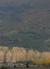 84-10060 (Iman Mirabzadeh) Tags: fall kelardasht iran canon20d sigma28300 tree mountain forest