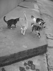 The meeting is over (Marchnwe) Tags: cat cats black white catwomen