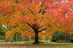 Enormous Autumn (Andrew Morrell Photography) Tags: autumn fall tree colors red yellow green color neighborhood shakerheights ohio suburbia 15fav wow wallpaper background mytop20mostviewed