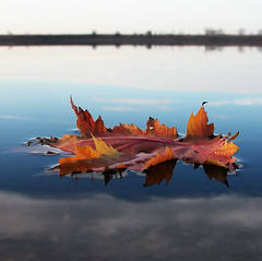 ...Fall... (Random Images from The Heartland) Tags: autumn reflection fall topv111 southdakota reflections leaf topf50 topf100 topf20 top20favview bail56 randomimagesfromtheheartland