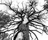 (Bubba Trout) Tags: arizona tree tag3 taggedout interestingness tag2 tag1 sedona hike trail allrightsreserved i500 ©allrightsreserved interestingness1500 3waychallenge 3wc